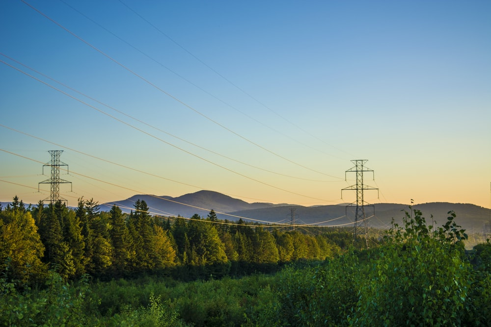 electric posts near tress under clear sky at daytime
