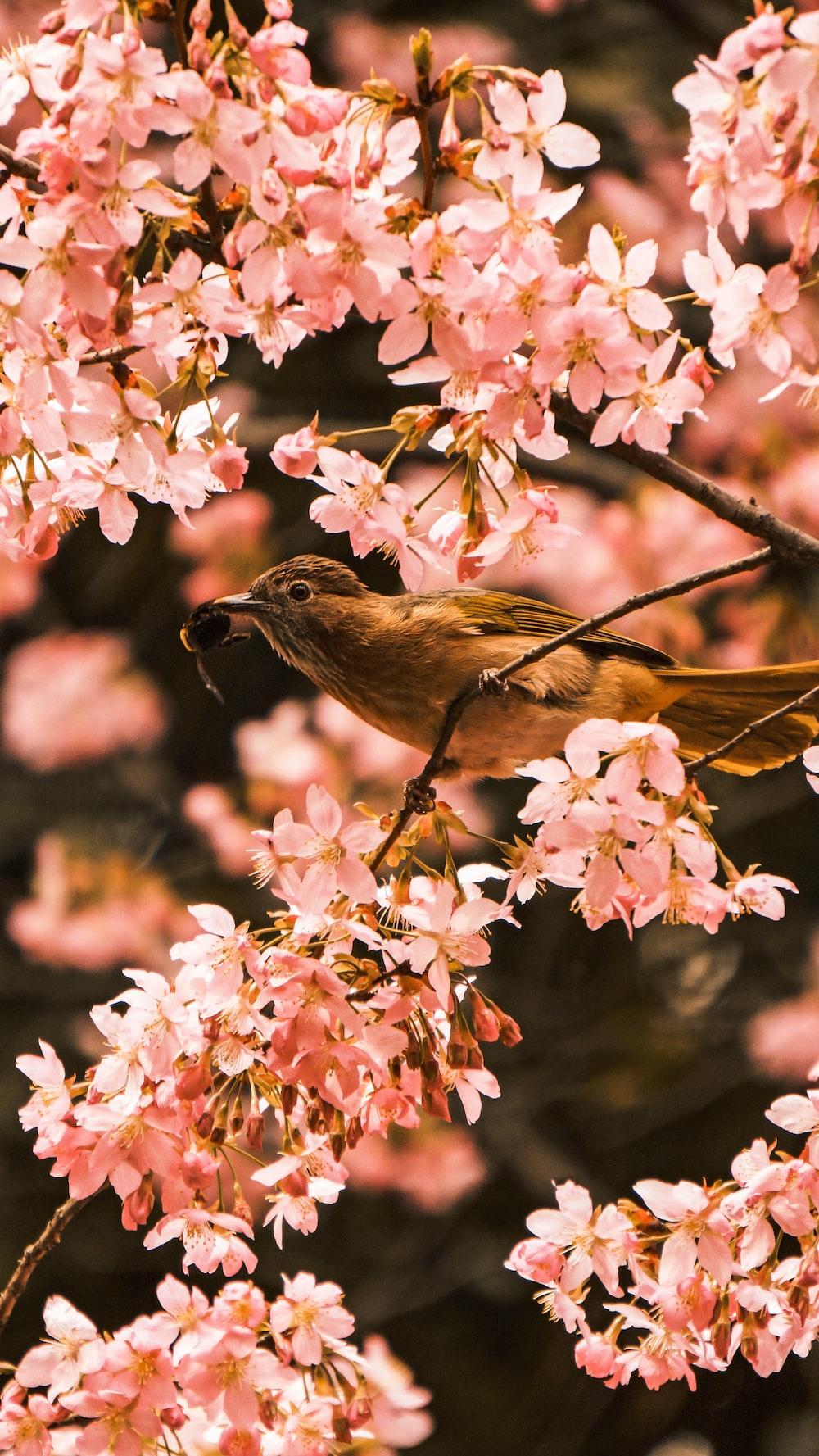 bird perching on tree during daytime