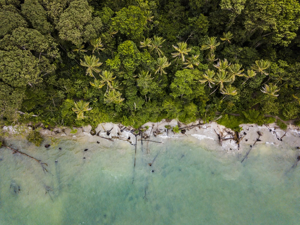 aerial view of trees near sea