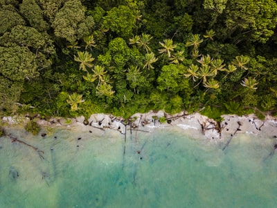 aerial view of trees near sea costa rica zoom background