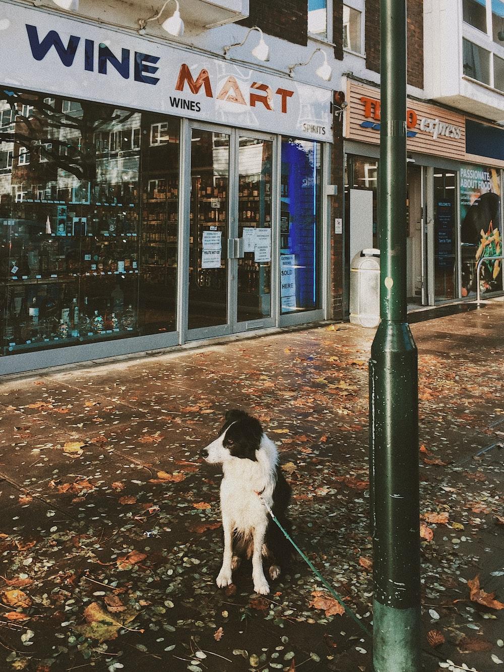 white and black dog near Wine Mart