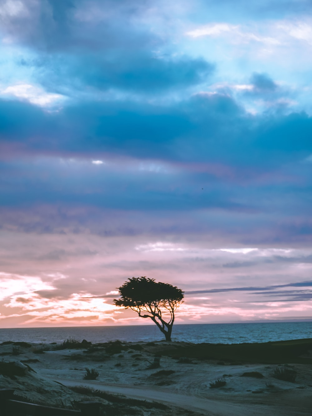 tree at shore under blue sky
