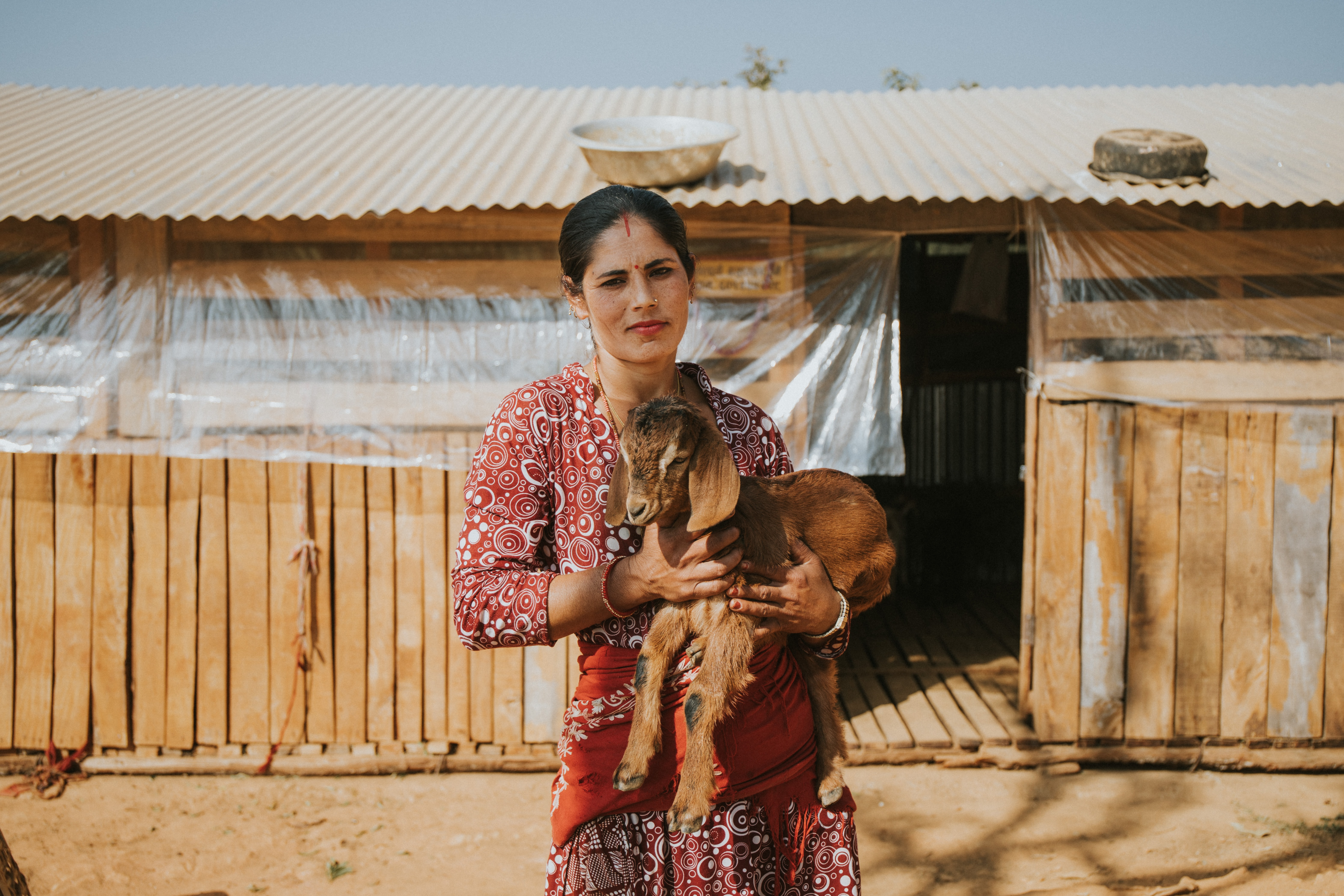 a woman in a red sari carrying a brown goat