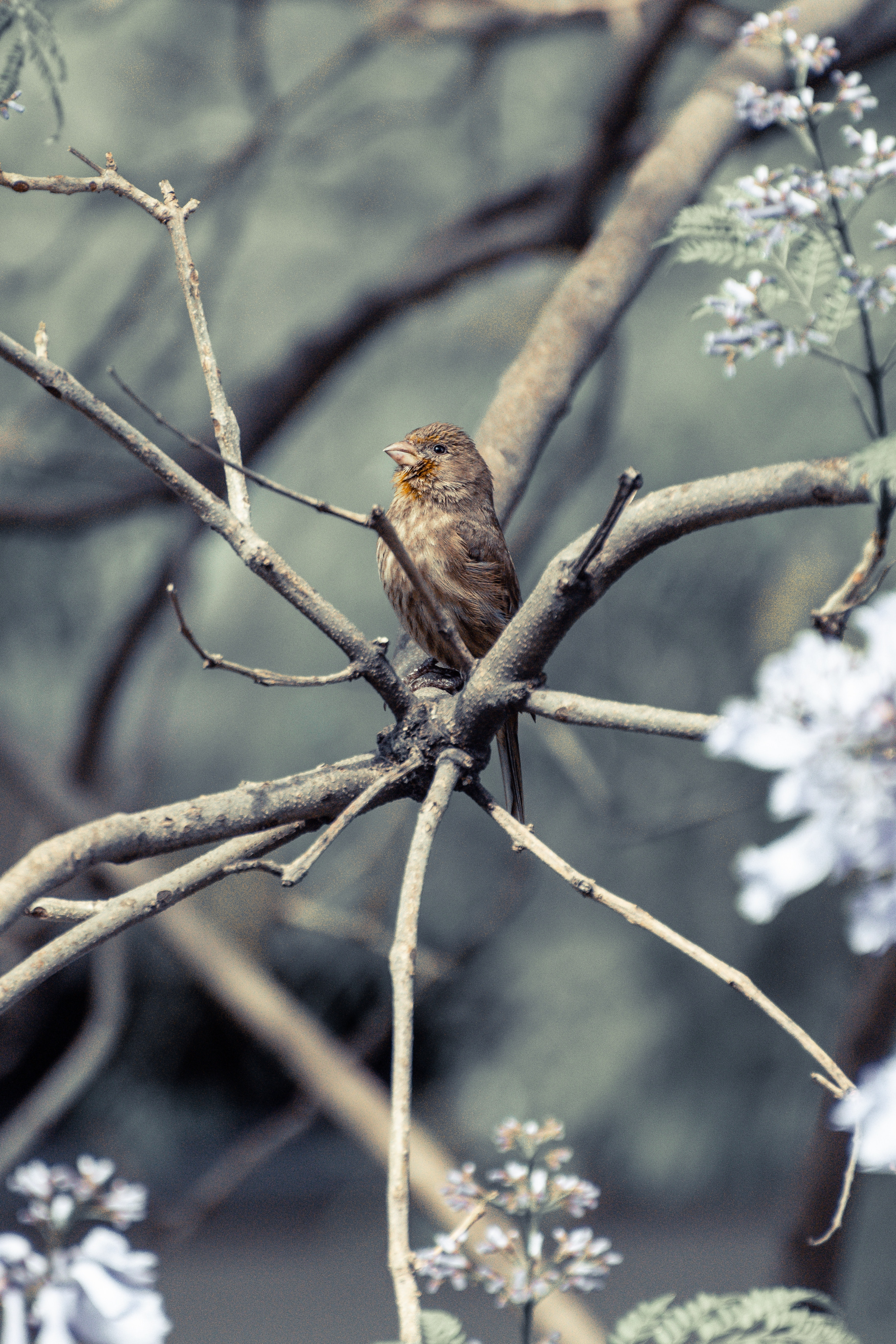brown bird perch on tree branch