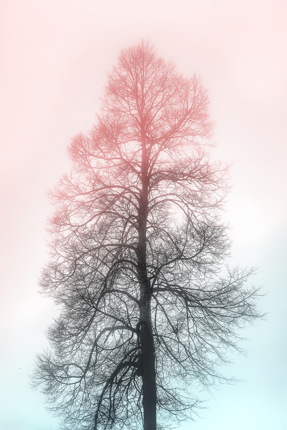 silhouette of withered tree
