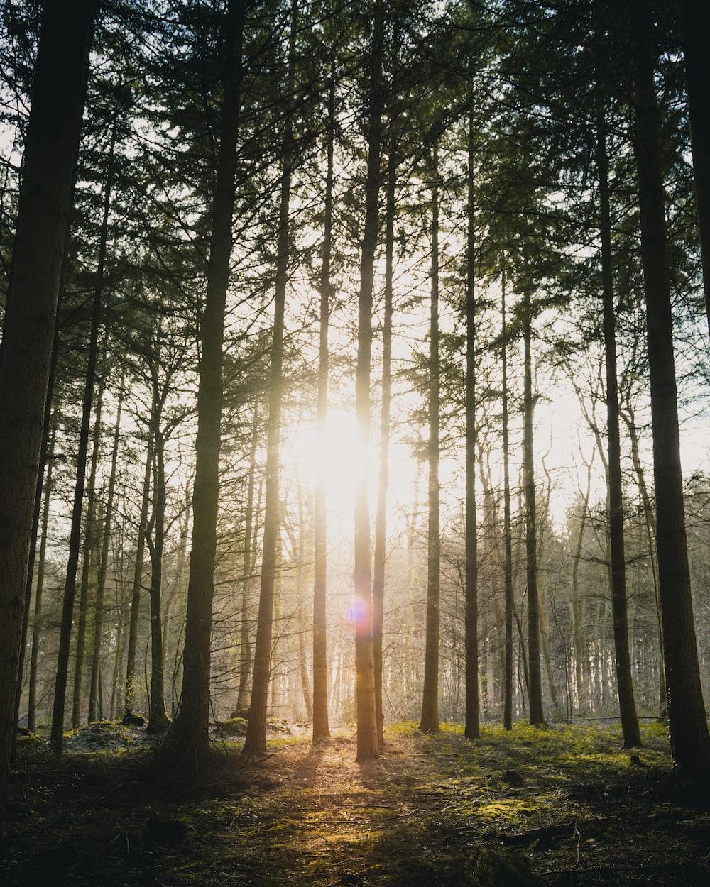 sunlight piercing through woods