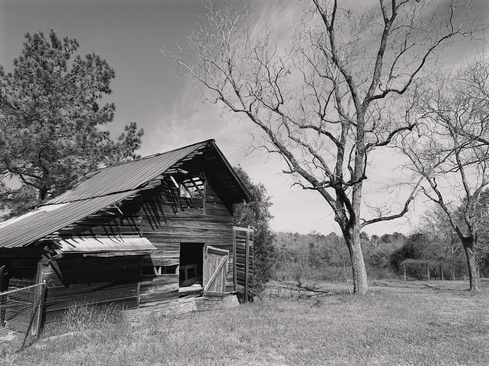 grayscale photography of wooden house beside tree