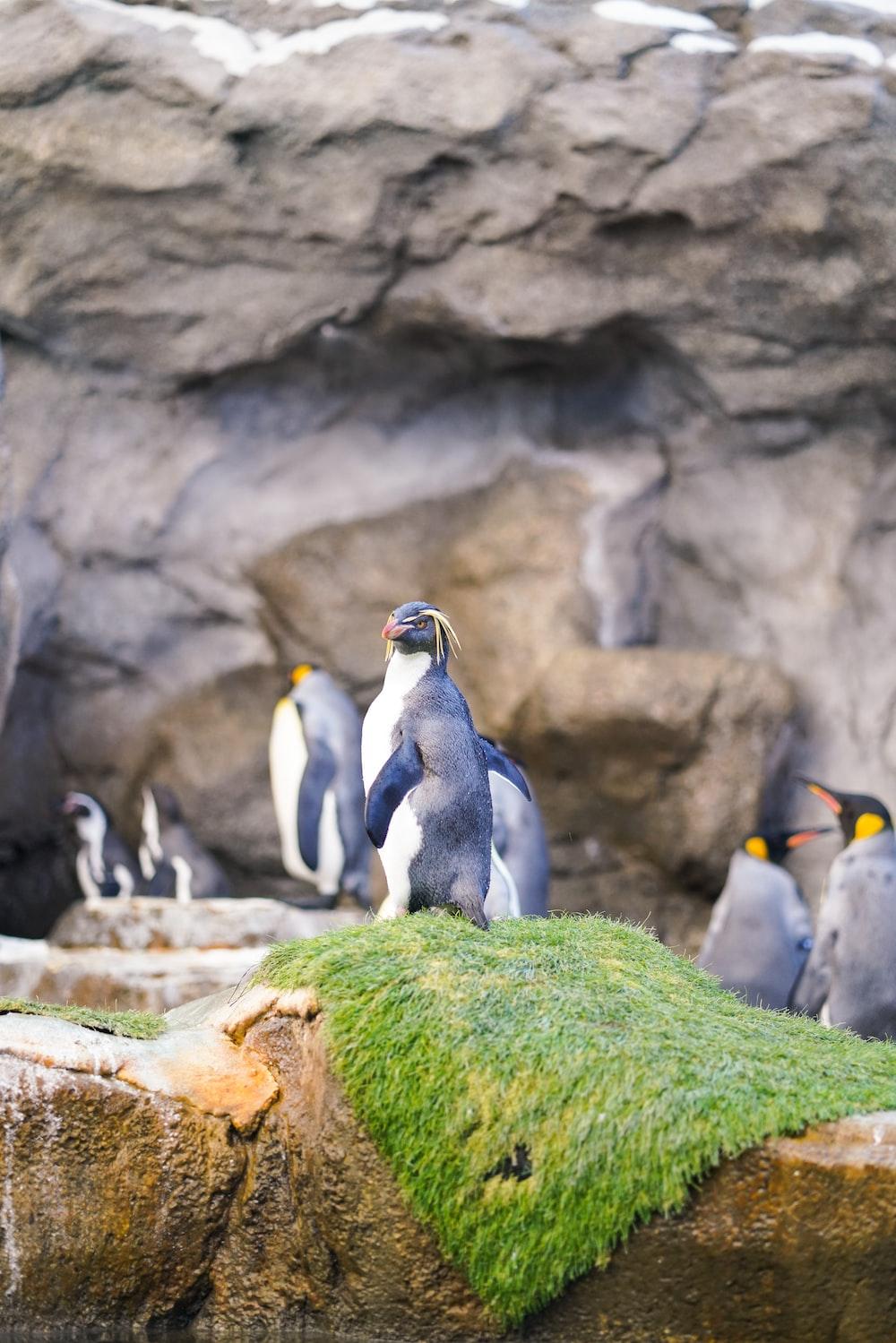 flock of penguin standing