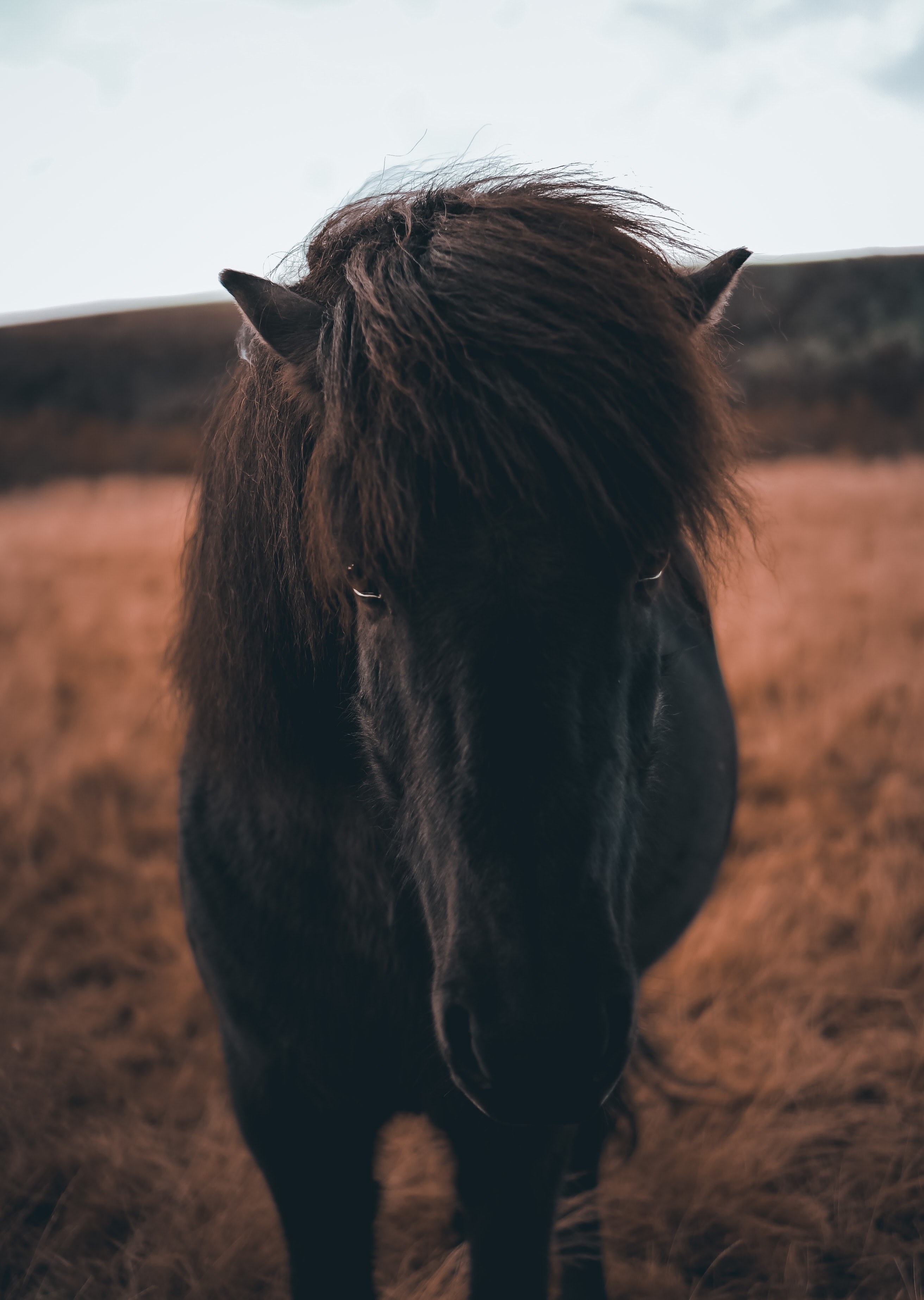 selective focus photography of black horse during daytime
