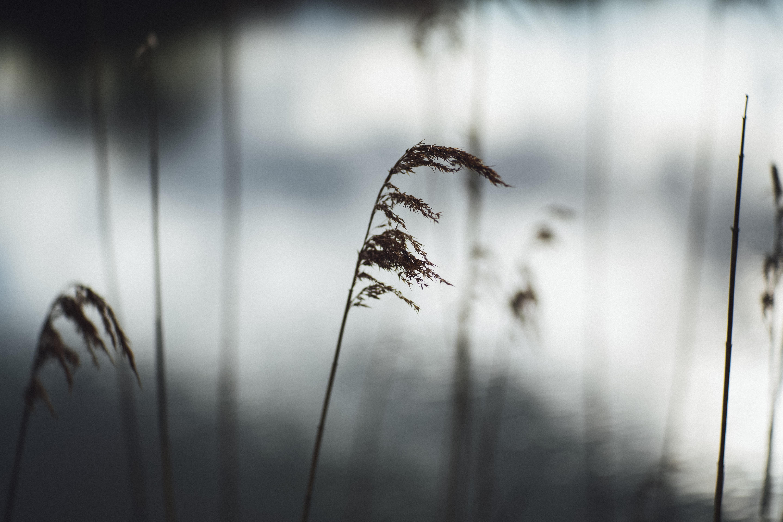 brown leaf plant in focus shot
