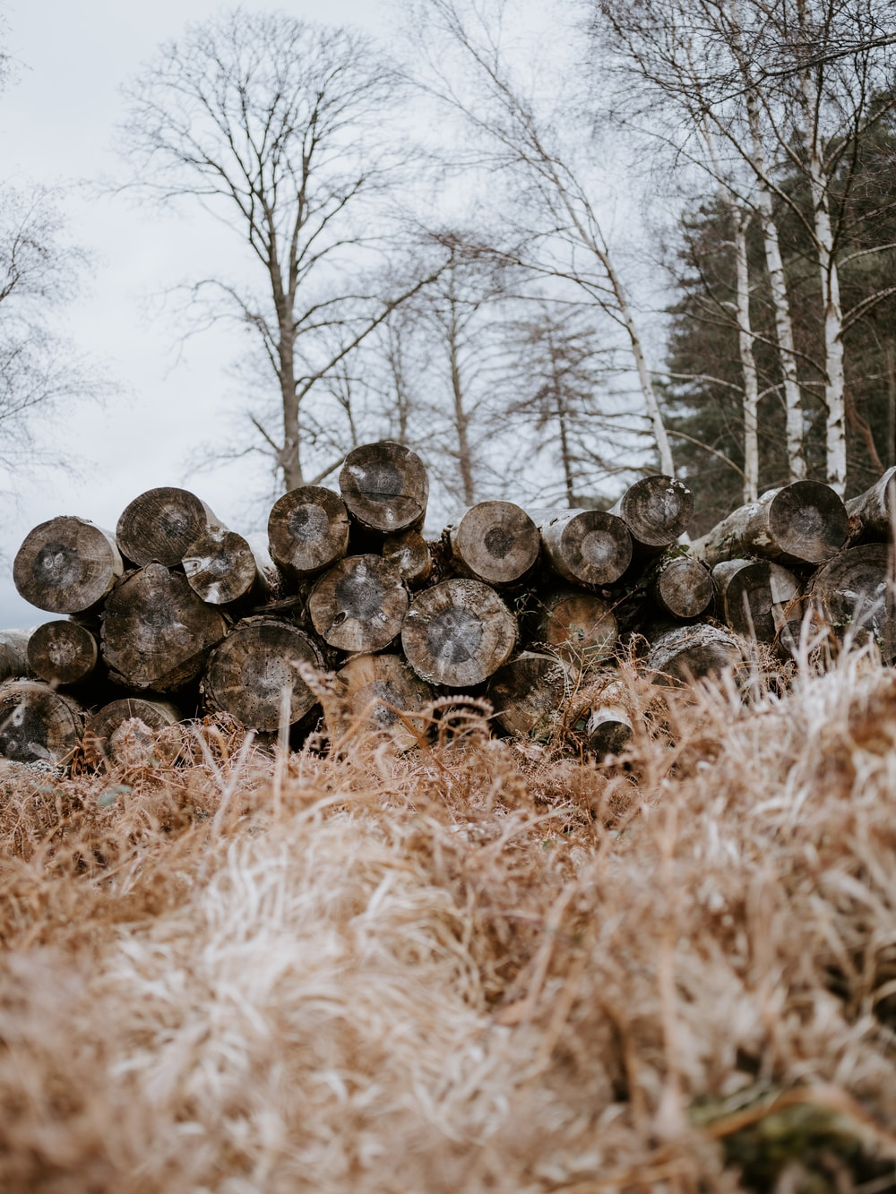 pile of tree slabs
