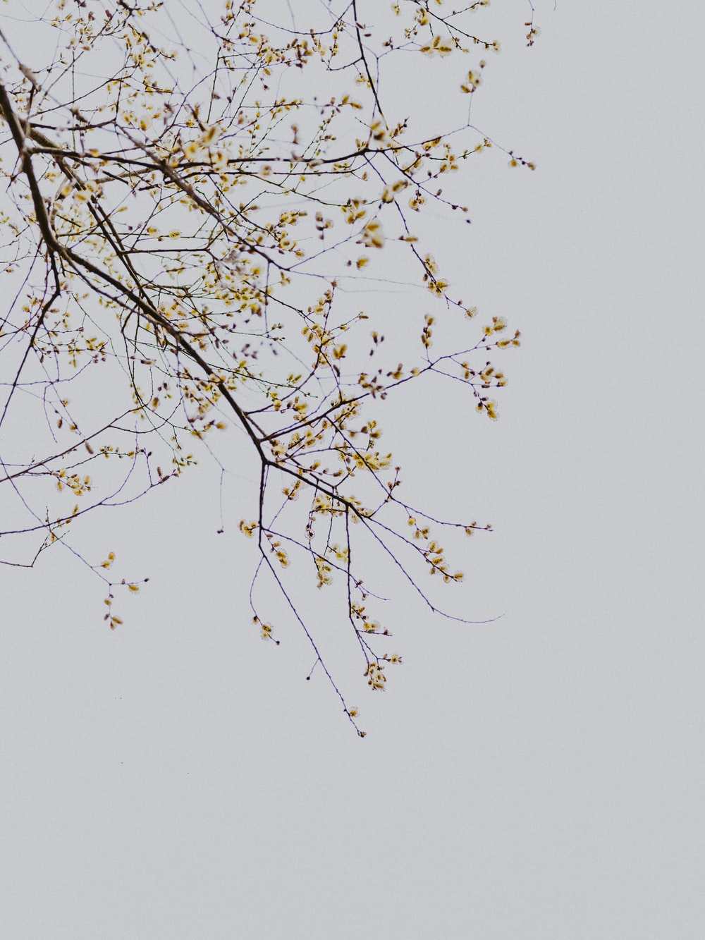 low-angle photography of yellow-leafed tree