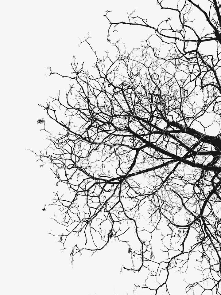Beneath My Branches