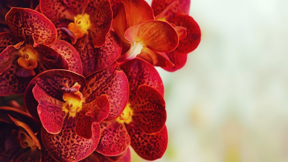 pink orchids lot