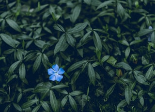 blue-petaled flower