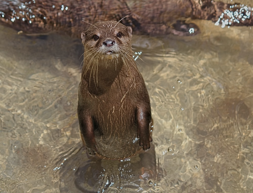 brown animal on water