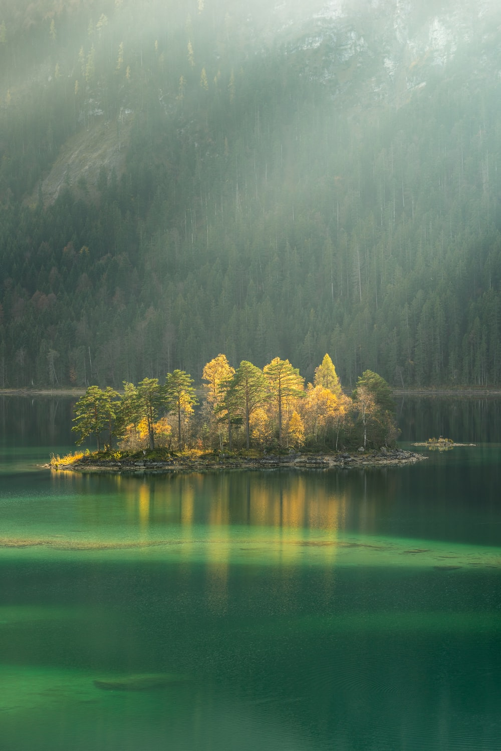 trees surrounded by body water during daytime