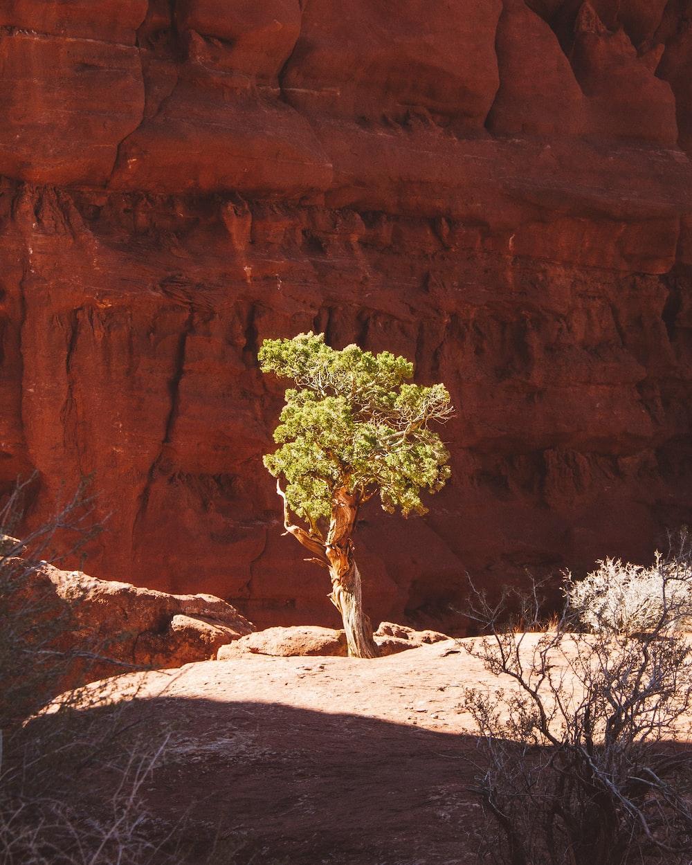 green-leafed tree beside rock