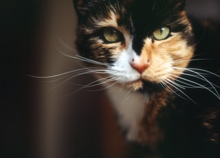 shallow focus photography of orange, black, and white cat
