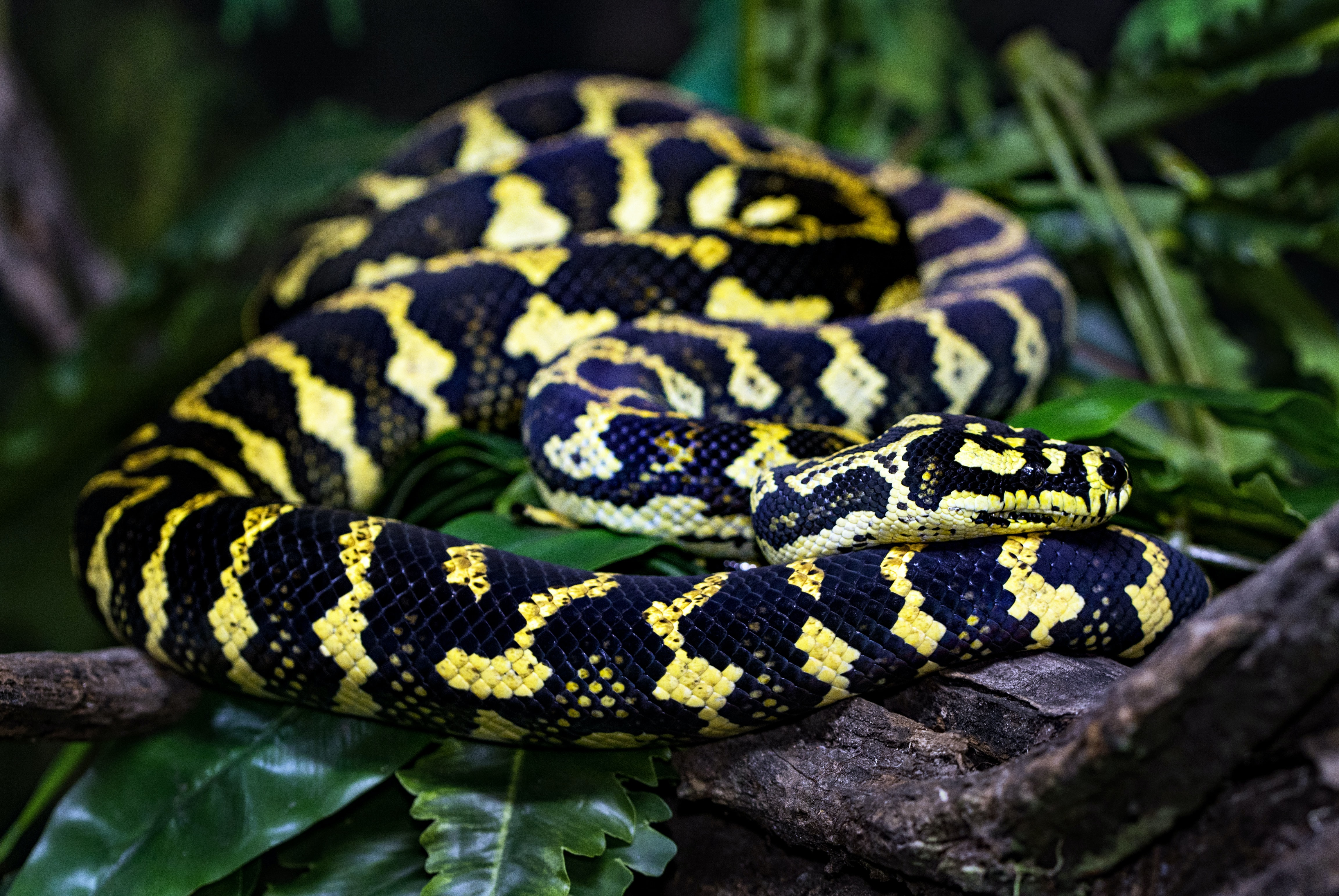 shallow focus photography of black and yellow snake