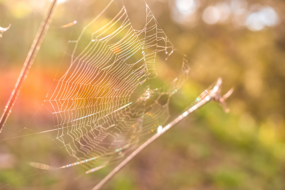 spider web view