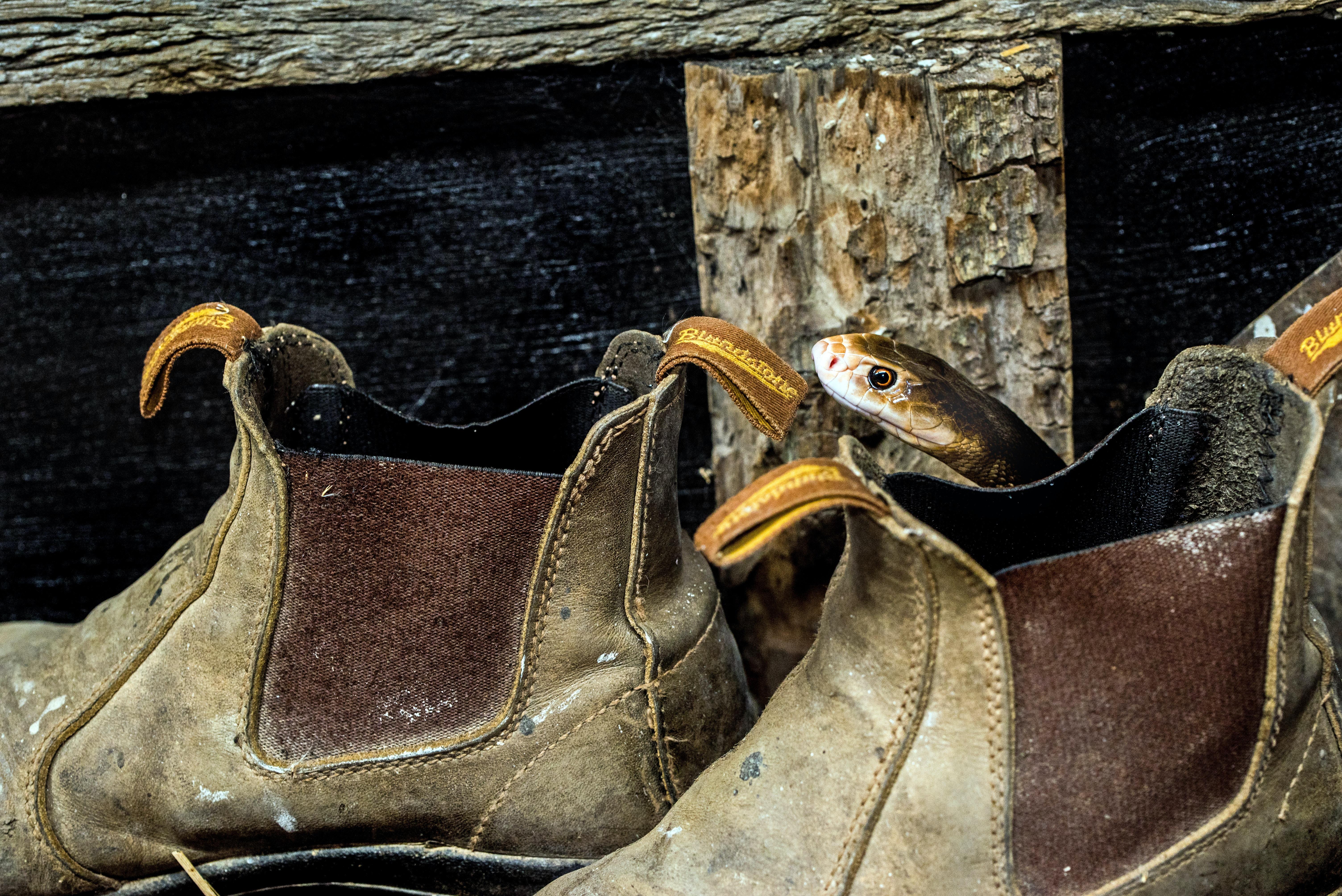 snake on brown boot