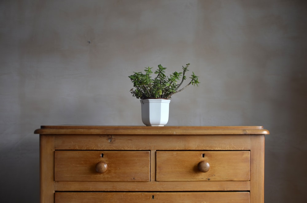 green-leafed plant on drawer