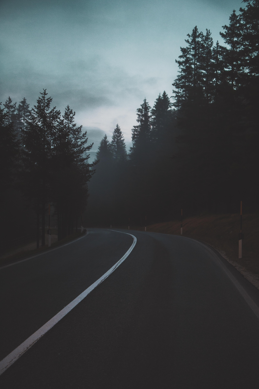 black road between trees during daytime