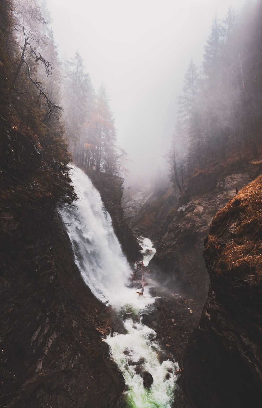 fog surrounding forest with waterfalls