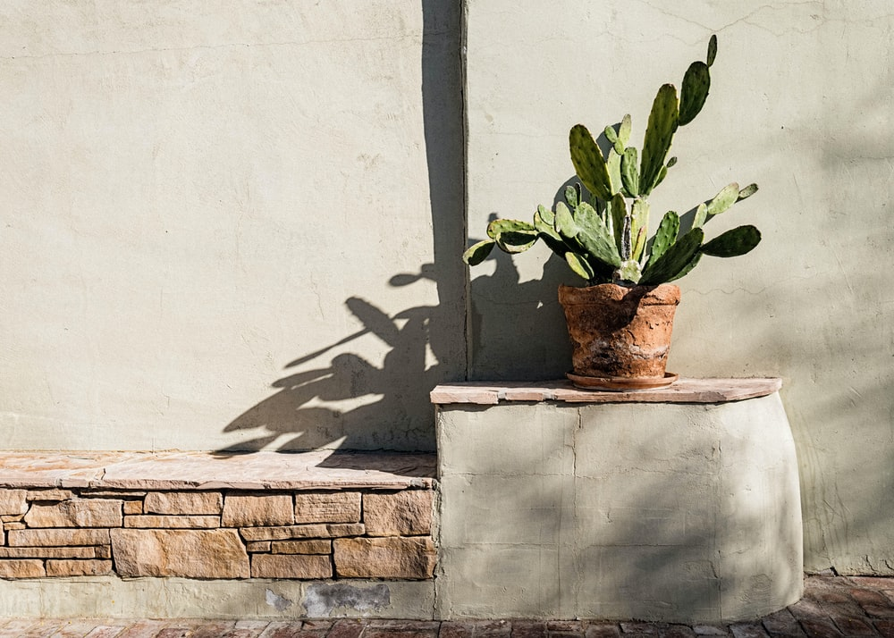 green succulent plant on pot beside wall