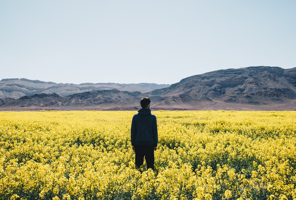 man standing on yellow flower field under blue sky