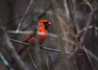orange and black bird on the trunk photography
