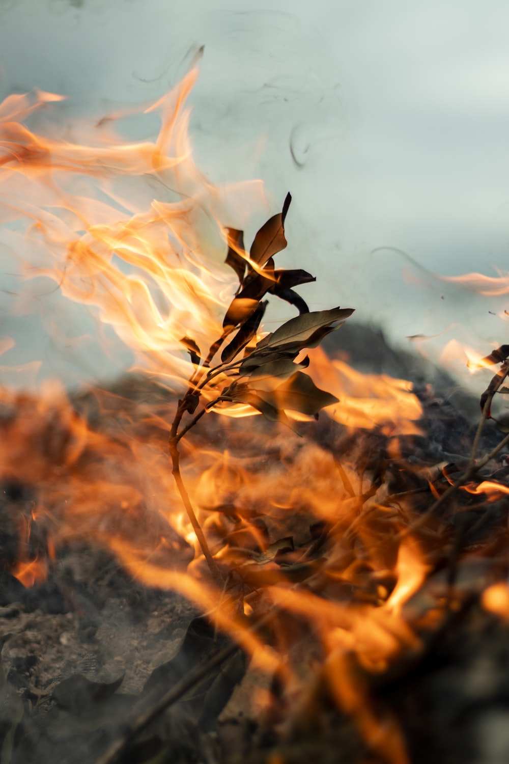 plant burned with fire