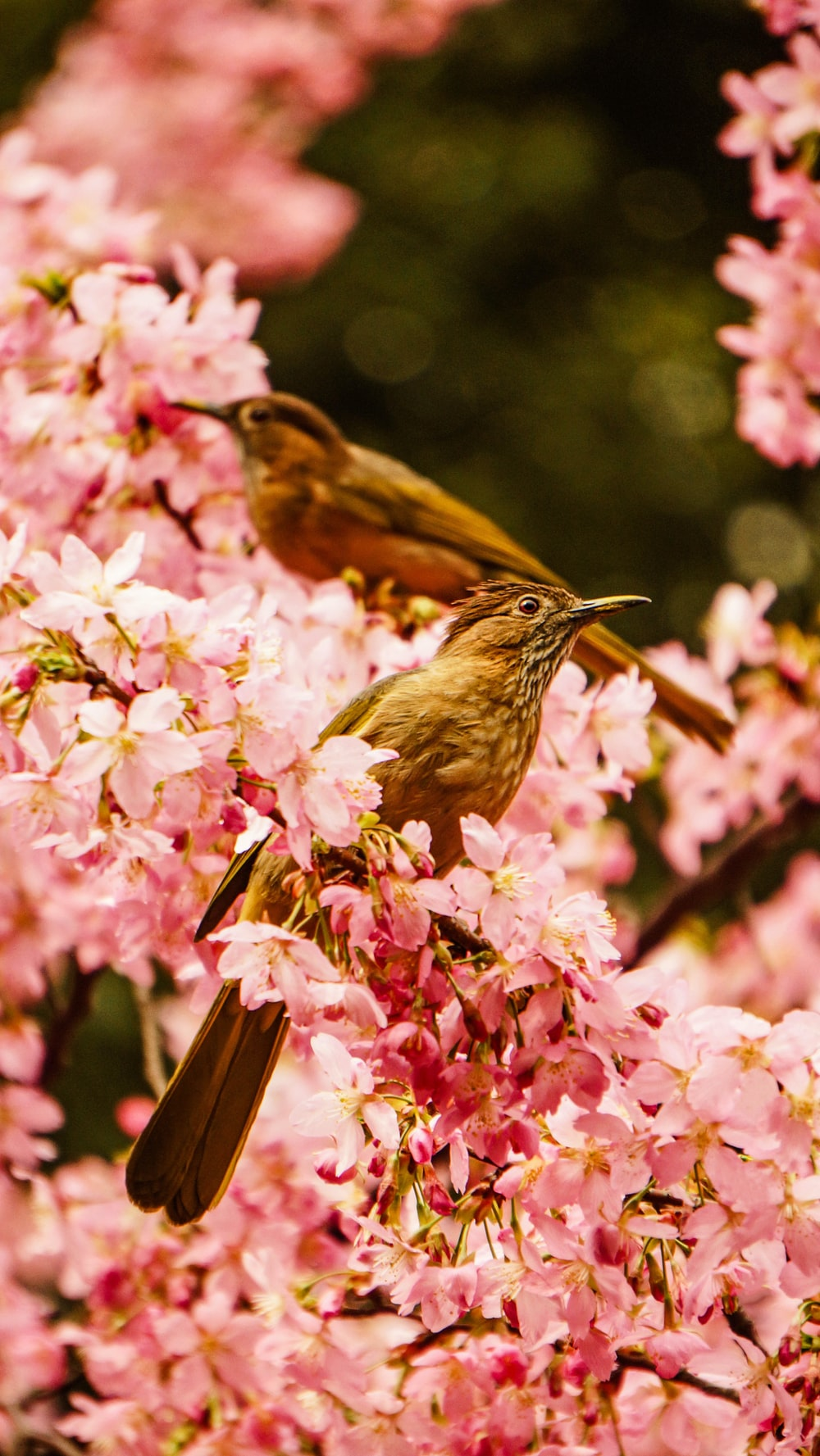 two brown birds on flower