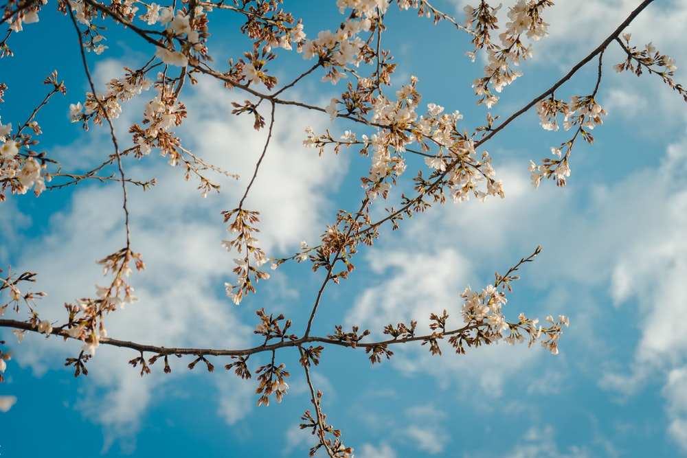 low-angle photography of tree under cloudy blue sky during daytime