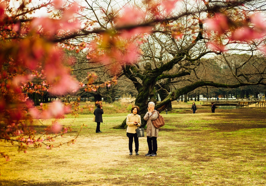 A couple locals enjoying the early plum blossoms