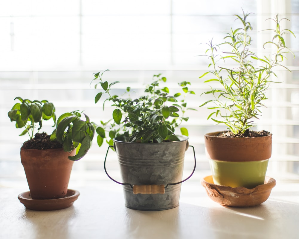 three green-leafed plants in pot