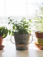 Can I Make an Indoor Garden Simple Tips to Help You Succeed
