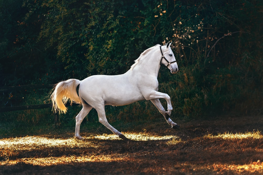 white horse running on grass field