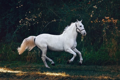 running white horse horse zoom background