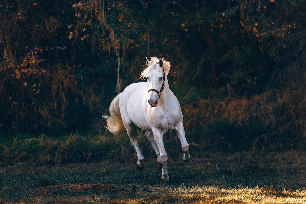shallow focus photo of white horse running