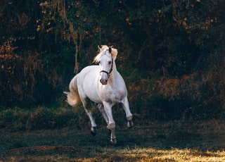 shallow focus photo of white horse running