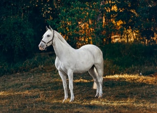 white horse on forest