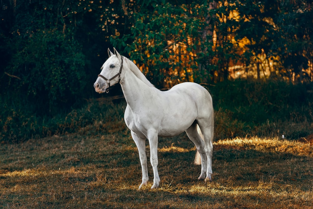 Horse Wallpapers Free Hd Download 500 Hq Unsplash