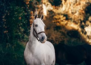 white horse standing near plant