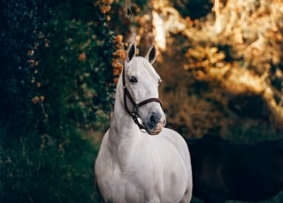 white horse standing near plant