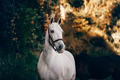 white horse standing near plant horse zoom background