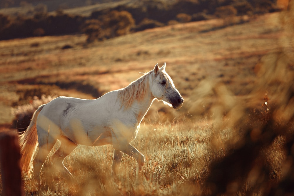 white horse at middle of field