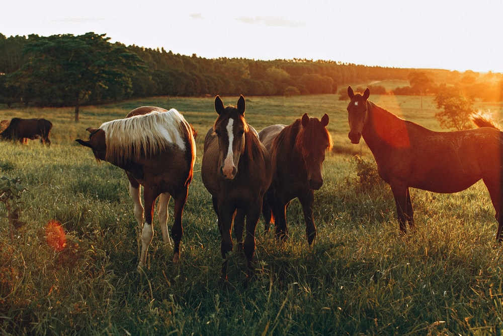 horses on grass field during daytime