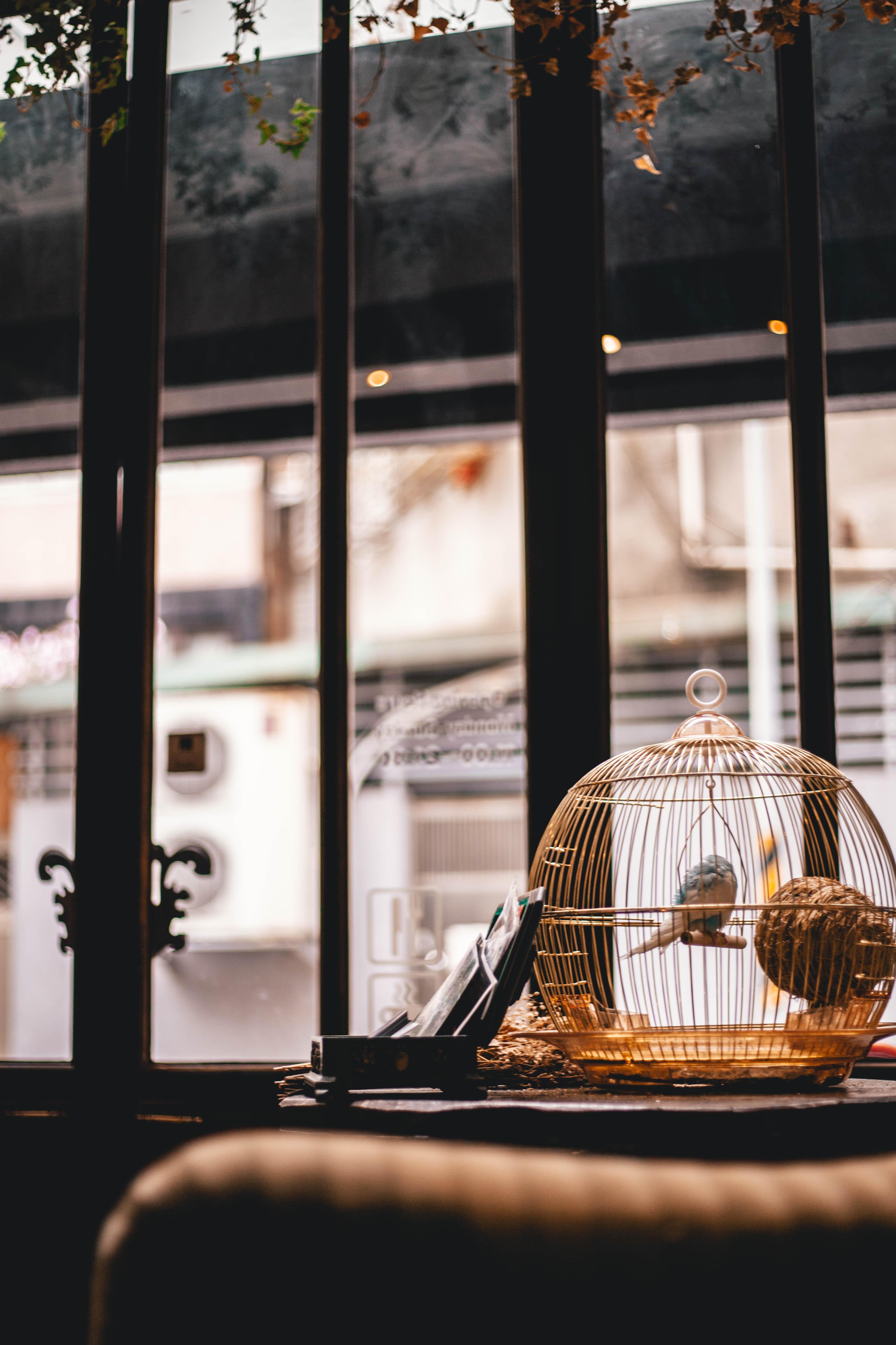 blue bird in brown birdcage